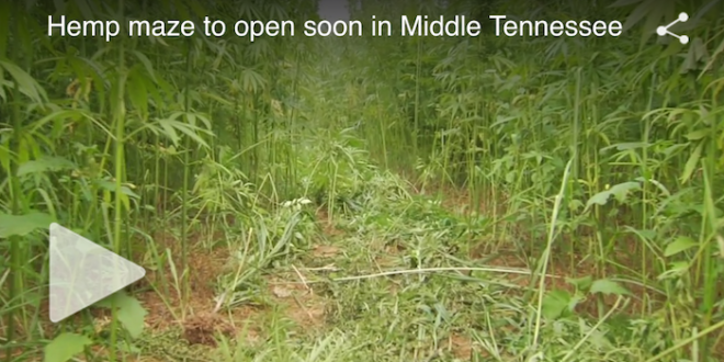 Life-size hemp maze to open soon in Middle Tennessee
